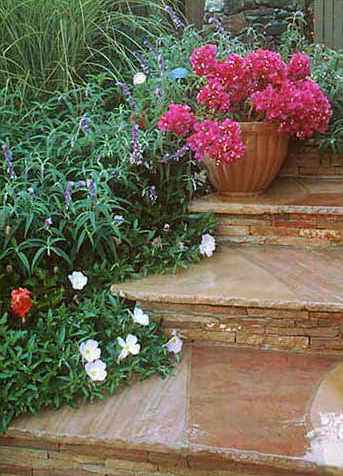 Flagstone steps and landscape planting